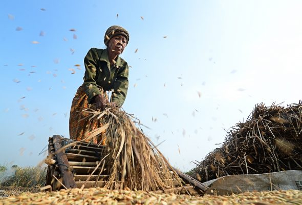 Keeping Seeds in Peoples' Hands – Launch of the Right to Food and Nutrition Watch