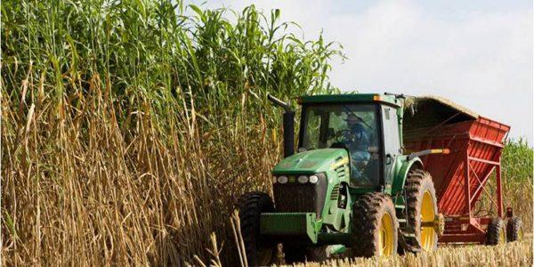 Publication: Bioenergy in the EU
